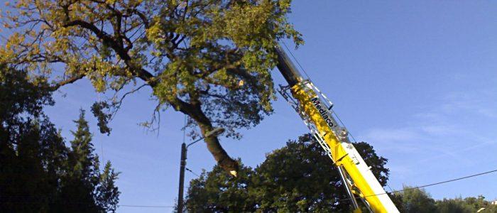 Abattage arbre grue