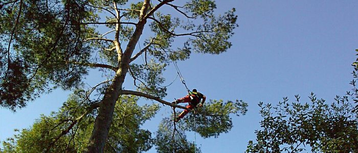 Ebranchage arbre