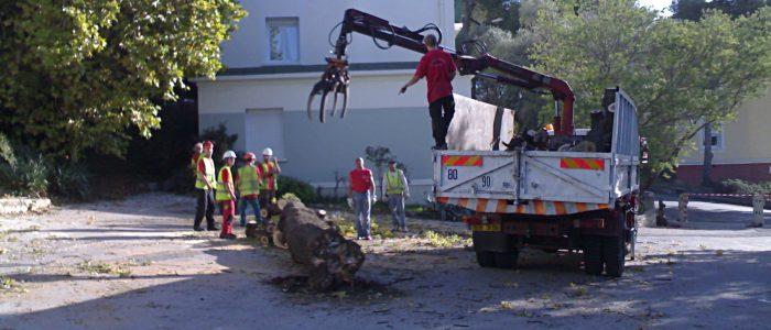 Grutage tronc arbre